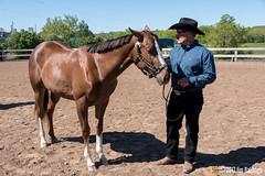 JBC_8233.jpg (Jim Babbage) Tags: krahc annualshow appaloosa horses