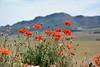 16052017-DSC_0220.jpg (stephan bc) Tags: landschap bloem seizoen yecla