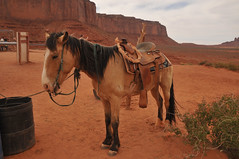 Saddled up (Vee living life to the full) Tags: sky cloud clouds blue picture view nikond300 2017 holiday travel tourism tourist placestovisit traveller pleasure usa california arizona distance city architecture creosote rock cliff sheer drop mountains monumentvalley utah skyline horizon sitting geology sedimentary compression uplift horse