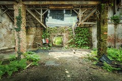 grows and thrives (blende einspunktacht) Tags: decay ilovedecay lostplaces verlasseneorte backtonature nature urbex urbanexploration canon tokina green