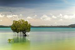 Palawan Philippine (Tony Medina) Tags: philippines ocean longexposure sigma1835mm canonm3 mirrorless palawan birds paradise sea seagulls mangrove midtide tropical dospalmasresort beach landscape seascape island arricefe puertoprincesa