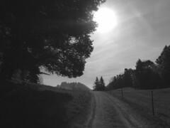 morning (Rosmarie Voegtli) Tags: passwang jura hiking blackandwhite monochrome tree baum arbre albero odc ourdailychallenge onthewayto hohewinde