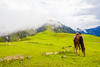 Paye Meadows and Makra Peak (mimalkera) Tags: kaghanvalley naran kaghan shogran siripaye payemeadows lakesaifulmalook travelpakistan travelbeautifulpakistan travel wanderlust