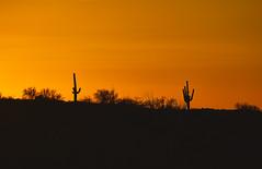 Saguaro Sunset (Palmer Images) Tags: telephoto silhouette scenics outdoors horizontal fullframe nopeople traveldestinations dry hot travel recreation peaceful saturated warmcolors desert ridge unitedstates saguaronationalpark arizona pimacounty tucaon 85747 rinconmpuntaindistrict summer sunset nightfall dusk settingsun sundown evening pm