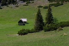 Schneealpe (Harald Reichmann) Tags: steiermark schneealpe grosbodenalm alm hütte landschaft fichte piceaabies bergkiefer latsche pinusmontana