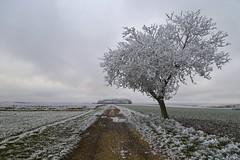 On veut de la fraicheur ! :-) (Thierry.Vaye) Tags: hiver gel givre nièvre cosne arbre chemin champ