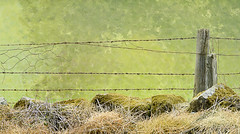 The escaping fence (Elisafox22 Still recovering from Shingles!) Tags: elisafox22 sony rx10iii fencedfriday hff fencefriday fencepost wooden grass trees wire barbedwire stones moss grasses sunshine texture textures aberdeenshire scotland outdoors elisaliddell©2017