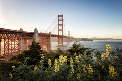 Bridge with Yellow Lupins (Muzzlehatch) Tags: golden gate bridge california san francisco wanderlust fog foggy