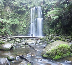 Waterfall in Old Forest (rubberducky_me) Tags: waterfall victoria water rainforest forest green moss river square australia