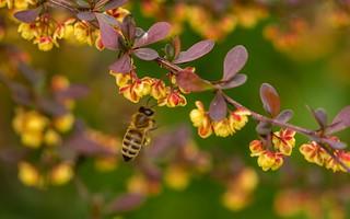 bee (08)