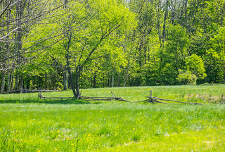 Fence In A Spring Field