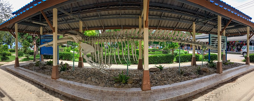 Blue Whale Skeleton, Hua Hin, Prachuap Khiri Khan, Panoramic