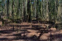 Multiple Nature 350 (pni) Tags: tree trunk park multiexposure multipleexposure tripleexposure keskuspuisto centralparken centralpark helsinki helsingfors finland suomi pekkanikrus skrubu pni