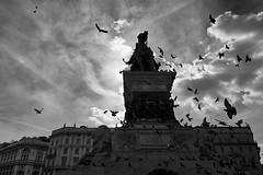 The pigeons, the lions and Vittorio Emanuele II (MaCri!) Tags: leica q typ116 summilux28mmf17asph primelenses streetphotography bw blackandwhite citylife milano piazzadelduomo pigeon lion vittorioemanueleii monument clouds backlight