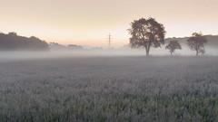 The Sound of Silence (Erich Hochstöger) Tags: landschaft landscape morgen morning nebel fog dunst mist natur nature imfreien outdoor canoneos70d sigma1750f28 österreich austria niederösterreich loweraustria amstetten