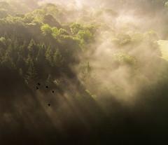 Murder in the Mist (Peter Quinn1) Tags: symondsyat yatrock symondsyatrock herefordshire mist sunlight sunrise riverwye crows murderofcrows corvids