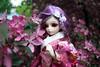 花見 (Pomidorika) Tags: yukata hanami sakura miyu fairyland bjd dolls doll minifee