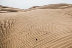 Banino-20170523-170533 (airbreather) Tags: china ningxia tengger desert shapotou inner mongolia dune sand waves ripples animal insect beetle tracks