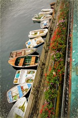 Boats and Flowers (Wes Iversen) Tags: california fencefriday hff monterey montereybay nikkor18300mm boats digitalart fences flowers painterly vacations water