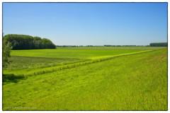 Green, greener, greenest (schreudermja) Tags: drimmelen noordbrabant northbrabant martyschreuder nikond800e sky green groen lucht blauw blue meadow
