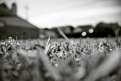 Lawn (-Simulacrum-) Tags: grass lawn dof monochrome nikon nikond5300 sigma 170500mmf28 softbackground landscape blackandwhite creative