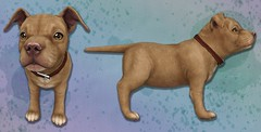 JIAN WIP - Pibble Pupper (The Arcade June 2016) ([JIAN]) Tags: secondlife mesh pitbull pibble puppy dog cute pet companion jian gacha thearcade wip sneakpeek