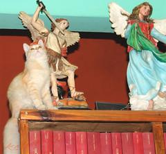 Entre seres celestiales (angelmarioksherattoflores) Tags: gato felinos animalesdomésticos mascotas boxer