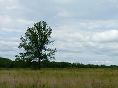Pole Farm grassland (Dendroica cerulea) Tags: grass grassland field tree sky clouds landscape spring polefarm mercermeadows lawrencetownship mercercounty nj newjersey