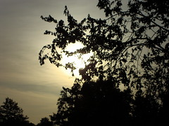 Thursday Morning. (dccradio) Tags: lumberton nc northcarolina robesoncounty outdoors outside plant nature natural tree trees morning morningsun sunrise sky silhouette foliage leaves branches treelimbs project365 photooftheday photo365