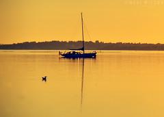 Sunset, Horsens fjord (Neal J.Wilson) Tags: horsens yacht silhouette dusk goldenhour sunsets jylland denmark d3200 danishlandscapes nikon scandinavia nordic sailing ducks sommer summer boat water still calm relaxing