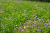 Horse Fields (matthewjpollard) Tags: germany macro field swabian a6000 minolta 50mm