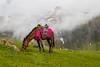 Horse (mimalkera) Tags: kaghanvalley naran kaghan shogran siripaye payemeadows lakesaifulmalook travelpakistan travelbeautifulpakistan travel wanderlust
