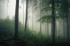 Nature (Netsrak) Tags: baum eu europa europe landschaft natur nebel wald fog landscape mist nature tree trees woods bäume rheinbach nordrheinwestfalen deutschland de eifel
