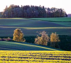Spring evening landscape (harald.bohn) Tags: field åker vår vårkveld grønt lysegrønt spiring spring green light lanscape lanskap trøndelag norge norway
