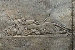 May 10: 81 Lion Hunt Reliefs (Aquafortis) Tags: art london england museums assyrian