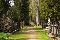 spring as it is (JoannaRB2009) Tags: spring nature path graveyard cemetery starycmentarzwłodzi łódź lodz polska poland green tree trees