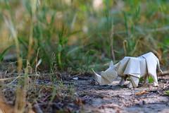 White Rhino ( origami ) (Adri 79) Tags: adrianodavanzo paper origami quentintrollip whiterhino