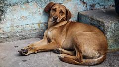 12junho_-14 (Laércio Souza) Tags: laerciosouza cachorros rolesp saopaulo periferia chaveiro igreja templo brasil