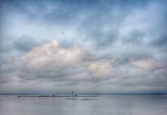 Lake Vänern... (iEagle2) Tags: lake vänern iphone6 iphone island bird