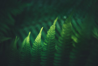 The shades of green