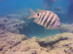Hanauma Bay 12 (venusnep) Tags: hanaumabay hanauma bay underwater tropicalfish tropical fish iphone watershot watershotpro hawaii snorkeling travel travelphotography may 2018