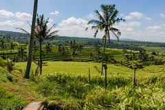 IMG_0623 (Ela&Piotr) Tags: bali indonesia indonezja jatiluwih ricefields
