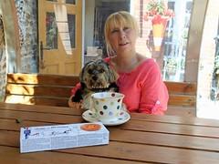 Flo Yorkie Poo Having Tea With Mel Pippy Woodley (@oakhamuk) Tags: flo yorkiepoo having tea with melpippywoodley martinbrookes