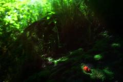 Ljusdunkel - Dappled (Cederquist Christoffer) Tags: fs170618 ljusdunkel fotosondag dappled nature themeoftheweek theme photosunday fotosöndag bakgrundsoskärpa blurrybackground backgroundblur outoffocus flower green sunlight cederquist canoneos60d sigmabokeh sigmaart sigma1835f18 sigma1835