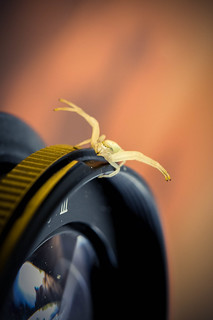 I want my picture taken too, the wee #crabspider said...