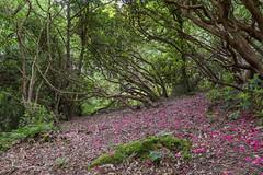 Leaning Trees (Ukfalc) Tags: trees colbygardens pembrokeshire canon 5dmkiv 1635ii wales