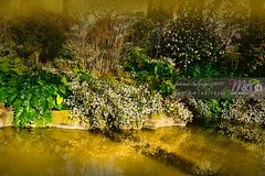 Amazing-Nature-Australian-Landscapes-DSC3359-1 (fatima_suljagic) Tags: melbourne melbournephotography melbournephotographer fineartprints fatimasuljagicmelbourne landscapes landscapephotography postcards nature naturephotographer