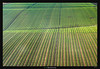 Wavy Greens (Ilan Shacham) Tags: field abstract pattern repetition view scenic green rows fineart fineartphotography israel megido agriculture