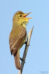 Happiness - Alegria (Yako36) Tags: portugal peniche ferrel bird birdwatching ave nature natureza nikon200500 nikond7000