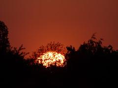 Heat (Lexie's Mum) Tags: walks walking walkingthedog spring sun nature sunset fiery